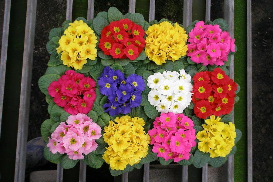 家族3代で花農家!フローリカルチャーリストタカハシ