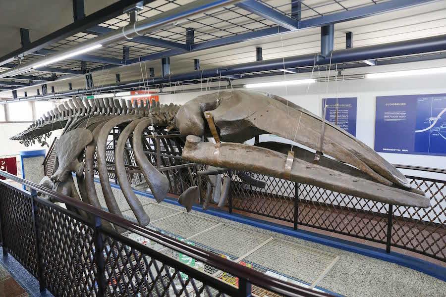 海のない町のクジラ (株)新十津川総合振興公社