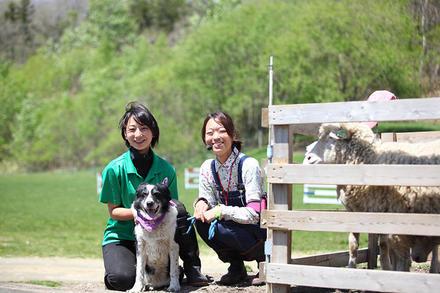 羊やアルパカと働く、二人の女性飼育員。
