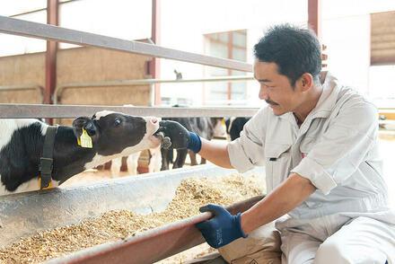 動物好きの方必見。子牛を育てるお仕事を募集しています!