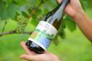滝川産ワインの歴史が始まった!えべおつWein