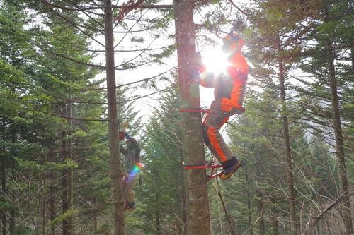 未来に向けて持続可能な「森」や「人」を育てる。㈱細畑林業