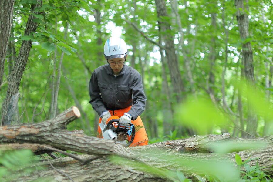 町の資源、天然林と炭焼き小屋を生かす小規模林業を。