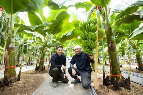 北海道産のバナナ物語。(有)946Skyファーム
