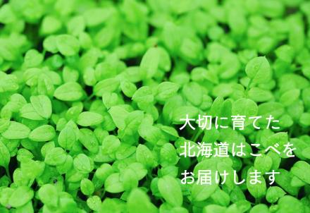 ペットを飼われている方へ。「北海道はこべ」新発売のお知らせ。