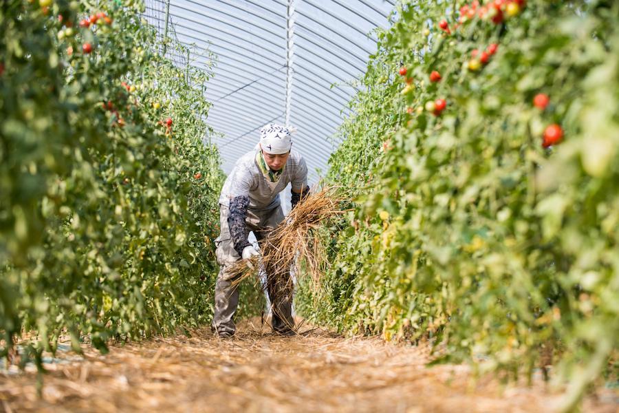 住まいもサポート!春〜秋の季節雇用・農作業スタッフを募集しています!