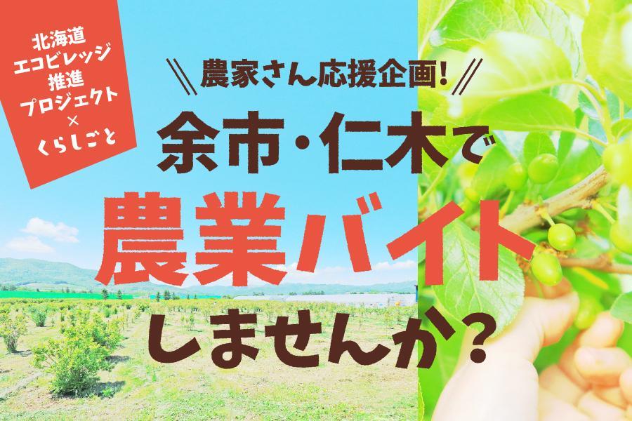 北海道 余市町・仁木町で短期農業バイトをしませんか?