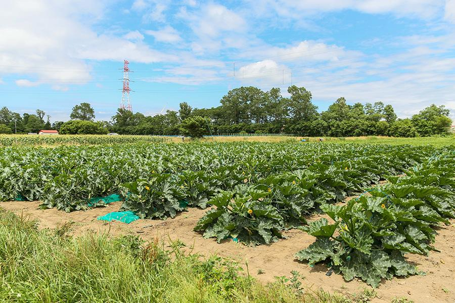 iskr_harukichi-farm_5.jpg