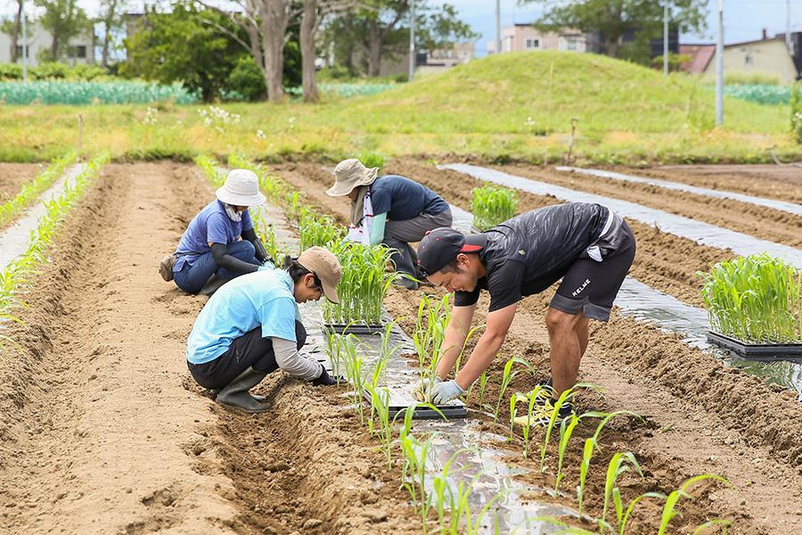 iskr_harukichi-farm_9.jpg