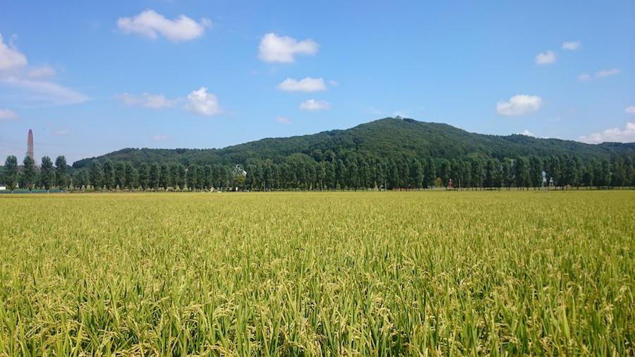 kurta_farm11.JPG