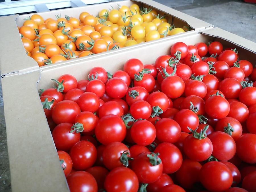 matsutsuru_farm7.jpg
