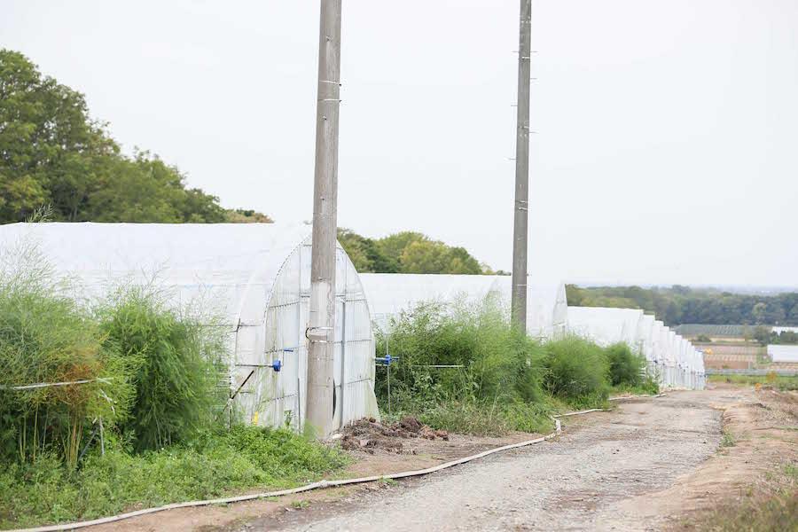 oshitani_farm13.jpg