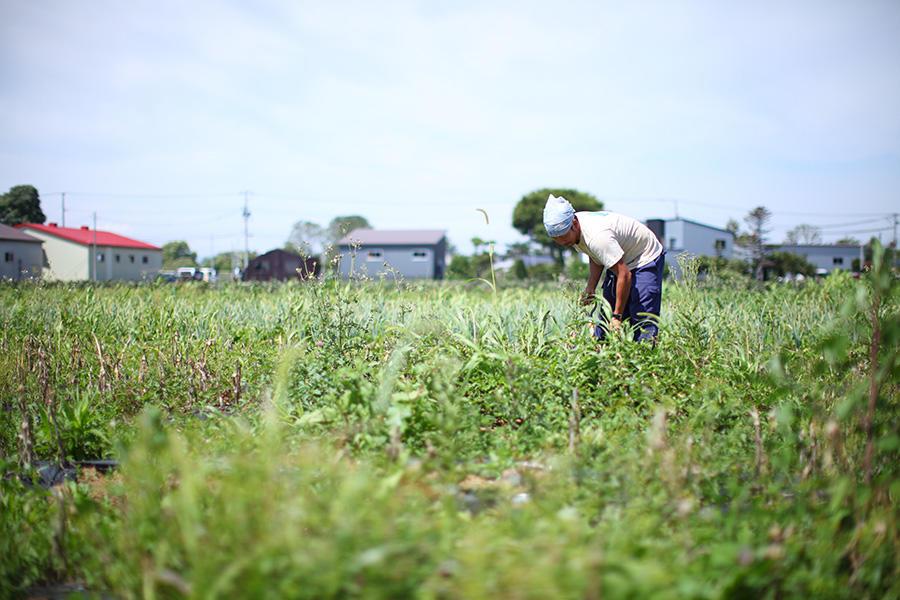 shizensaibai_cps_6.jpg