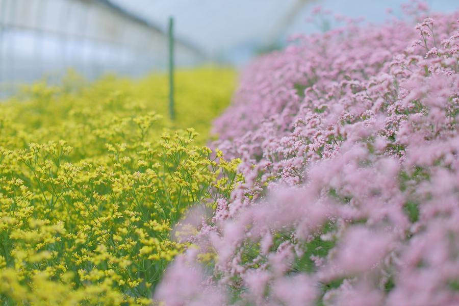 花卉(かき)農家 地原有紀さん